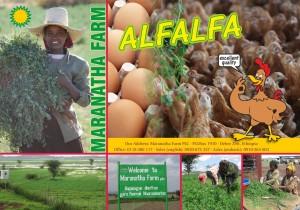 alfalfa advertentie achter