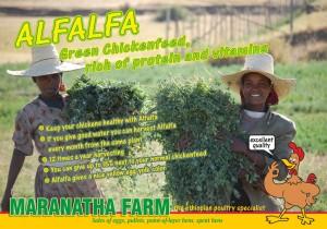 alfalfa advertentie voor
